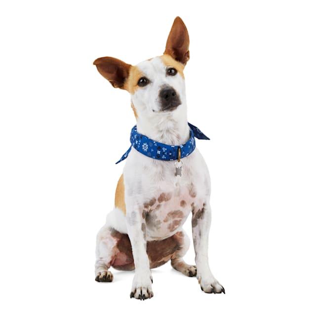 YOULY The Poet Paisley Dog Bandana & Collar, Small - Carousel image #1