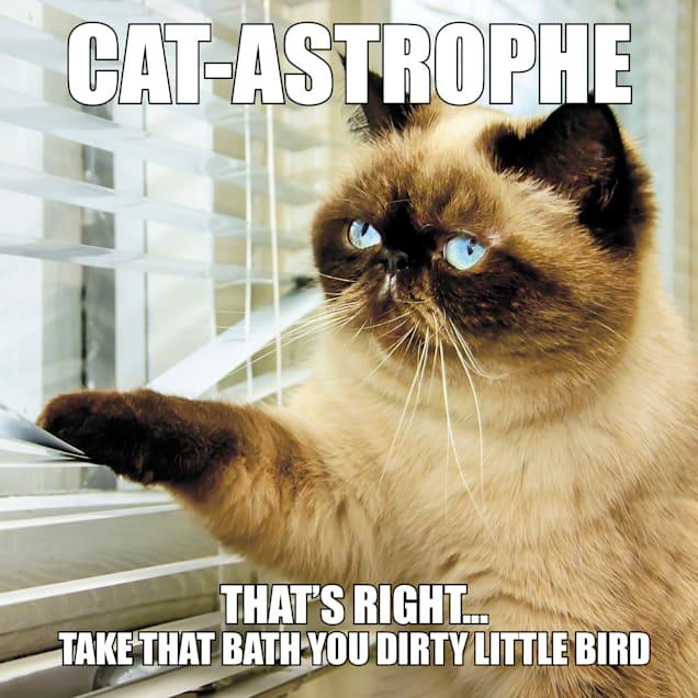 Willow Creek Press Cat-Astrophe Book - Carousel image #1