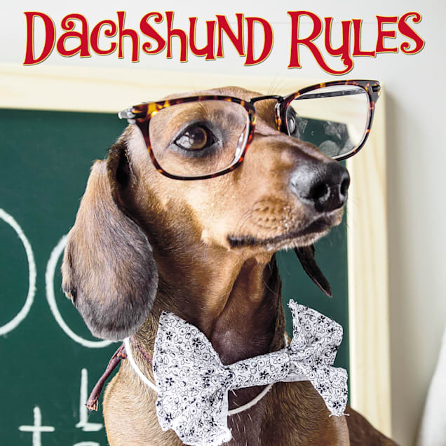 Willow Creek Press Dachshund Rules Book - Carousel image #1