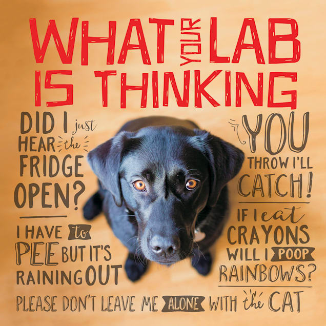 Willow Creek Press What Your Lab is Thinking Book - Carousel image #1