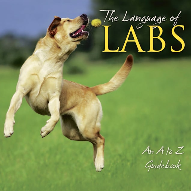 Willow Creek Press The Language Of Labs Book - Carousel image #1