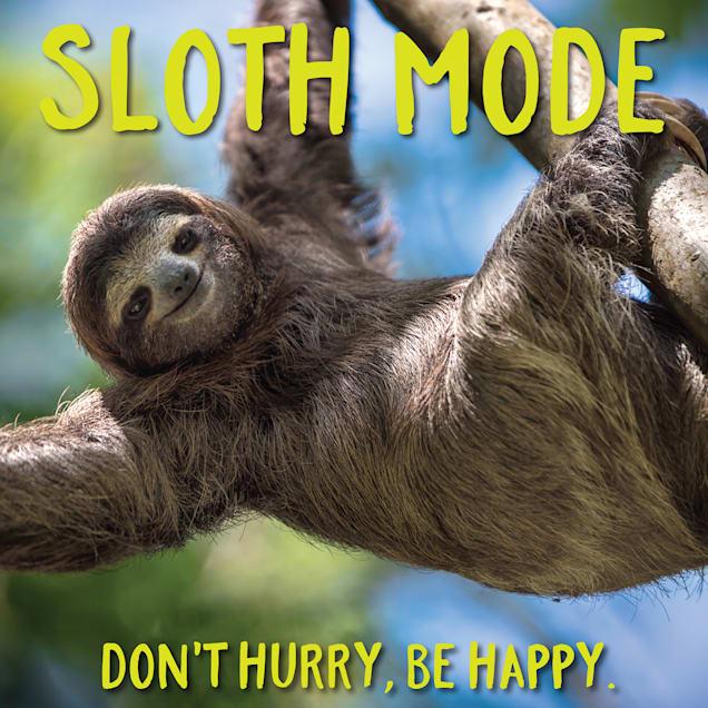 Willow Creek Press Sloth Mode Book - Carousel image #1