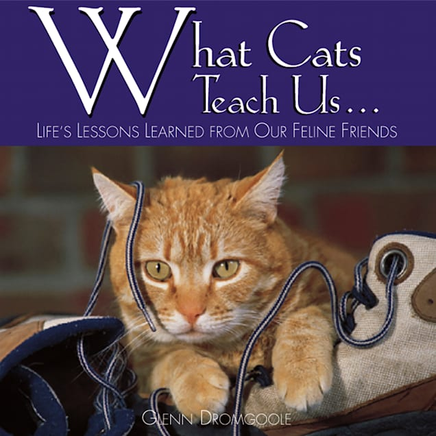 Willow Creek Press What Cats Teach Us Book - Carousel image #1