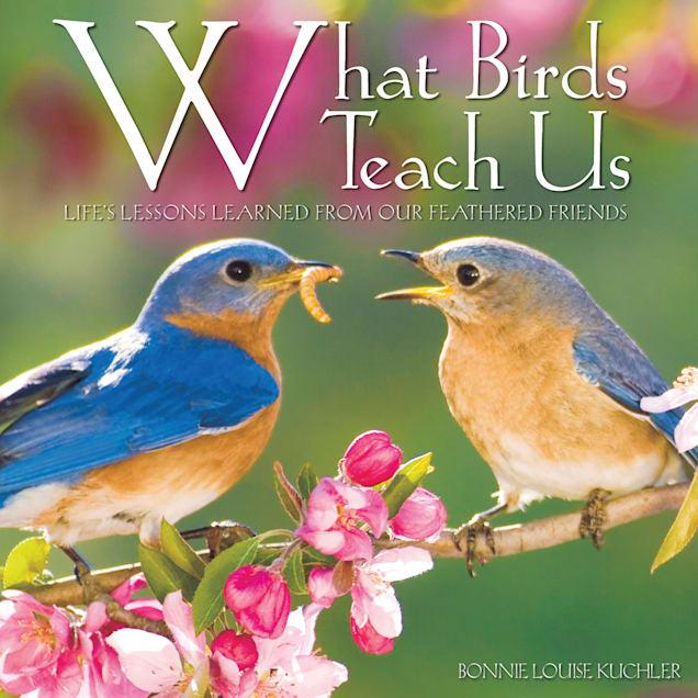 Willow Creek Press What Birds Teach Us Book - Carousel image #1