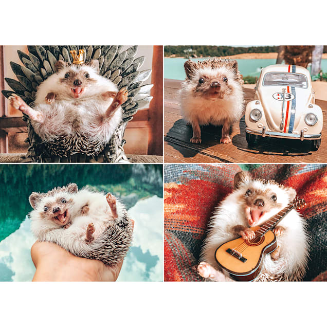 Willow Creek Press Herbee the Hedgehog 1000-Piece Puzzle - Carousel image #1