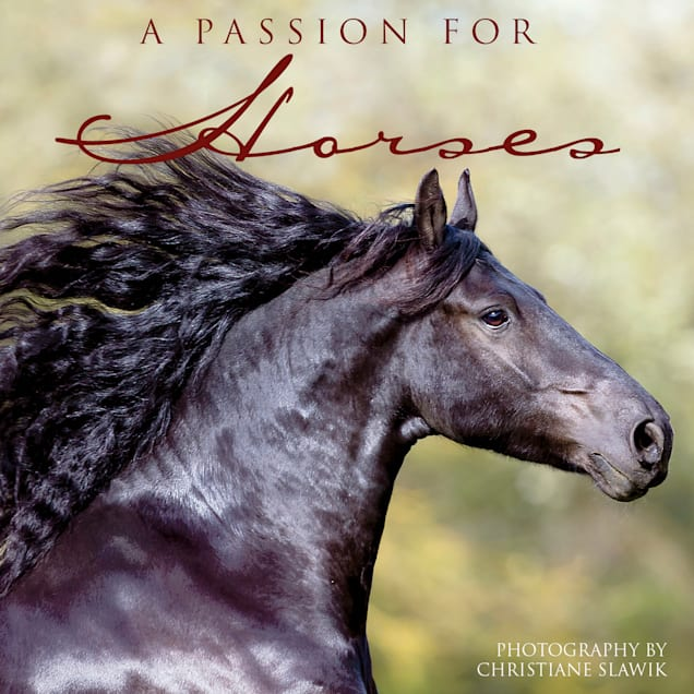Willow Creek Press Passion For Horses Book - Carousel image #1