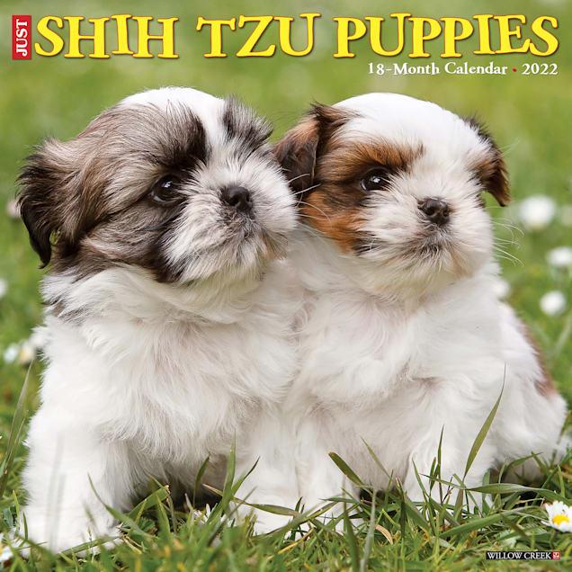 Willow Creek Press Just Shih Tzu Puppies 2022 Wall Calendar - Carousel image #1