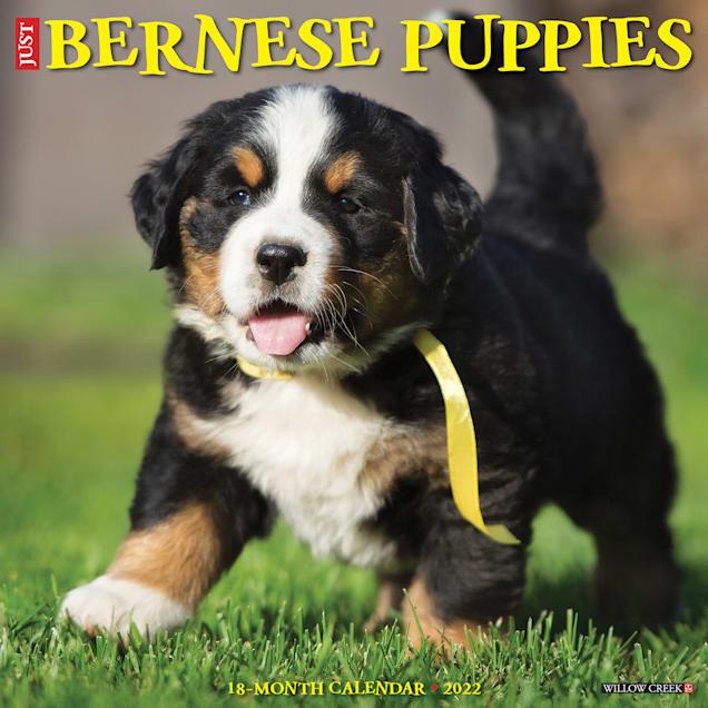 Willow Creek Press Just Bernese Mountain Puppies 2022 Wall Calendar - Carousel image #1
