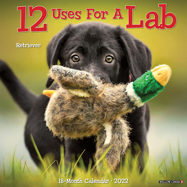 Willow Creek Press 12 Uses for a Lab 2022 Wall Calendar - Carousel image #1