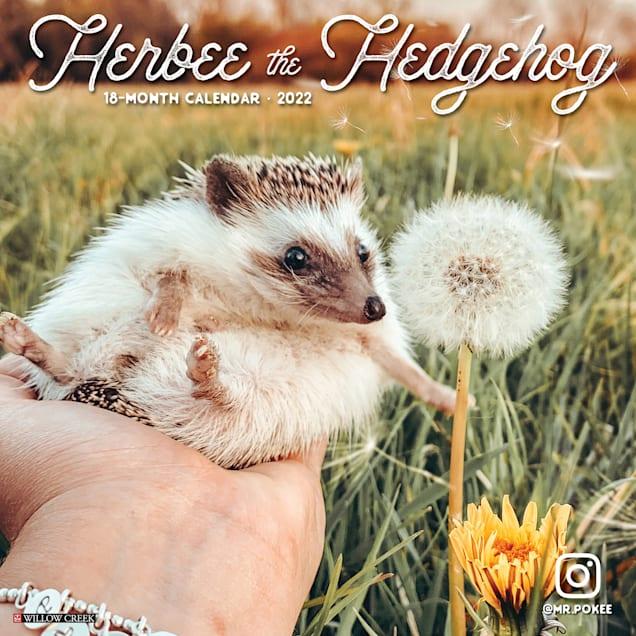 Willow Creek Press Herbee the Hedgehog 2022 Wall Calendar - Carousel image #1