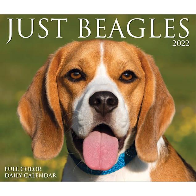 Willow Creek Press Beagles 2022 Box Calendar - Carousel image #1