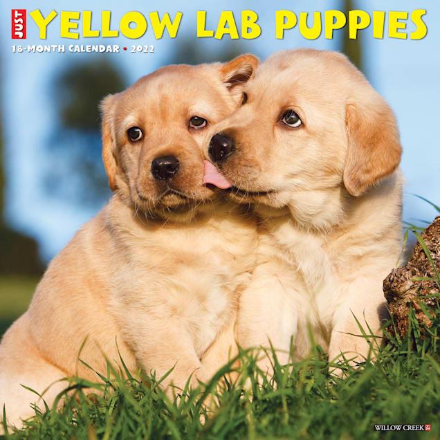 Willow Creek Press Just Yellow Lab Puppies 2022 Wall Calendar - Carousel image #1