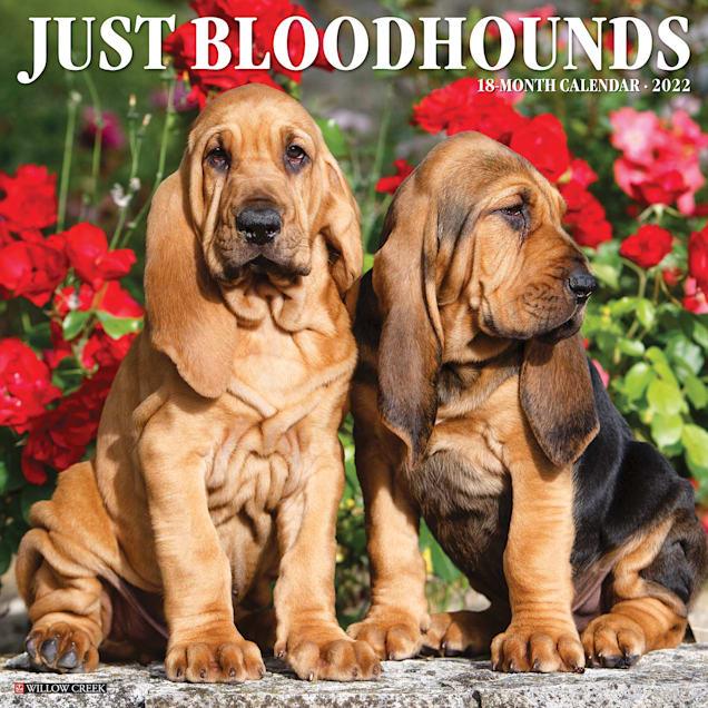 Willow Creek Press Just Bloodhounds 2022 Wall Calendar - Carousel image #1