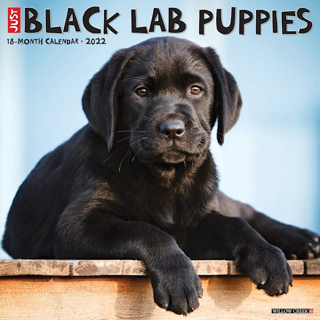 Willow Creek Press Just Black Lab Puppies 2022 Wall Calendar - Carousel image #1