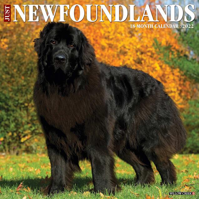 Willow Creek Press Just Newfoundlands 2022 Wall Calendar - Carousel image #1