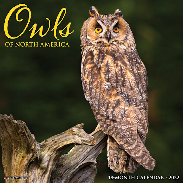Willow Creek Press Owls 2022 Wall Calendar - Carousel image #1
