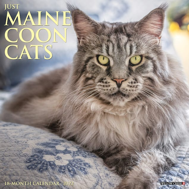 Willow Creek Press Just Maine Coon Cats 2022 Wall Calendar - Carousel image #1
