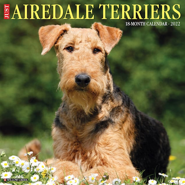 Willow Creek Press Just Airedale Terriers 2022 Wall Calendar - Carousel image #1