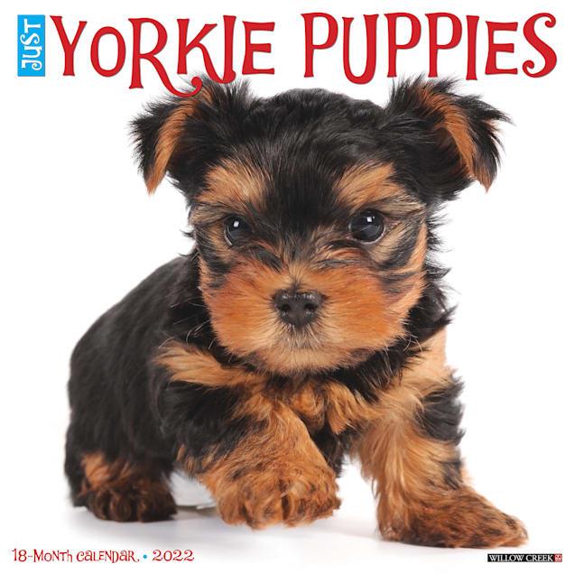 Willow Creek Press Just Yorkie Puppies 2022 Wall Calendar - Carousel image #1