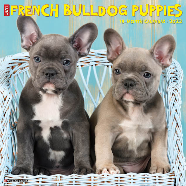 Willow Creek Press Just French Bulldog Puppies 2022 Wall Calendar - Carousel image #1