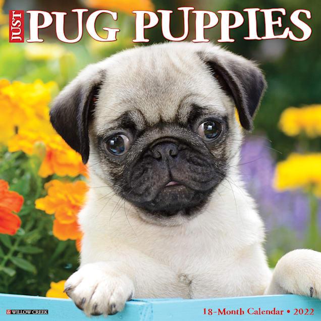 Willow Creek Press Just Pug Puppies 2022 Wall Calendar - Carousel image #1