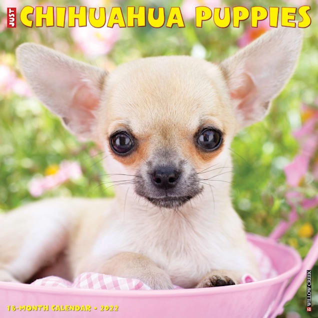 Willow Creek Press Just Chihuahua Puppies 2022 Wall Calendar - Carousel image #1