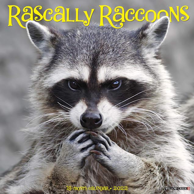 Willow Creek Press Rascally Raccoons 2022 Wall Calendar - Carousel image #1