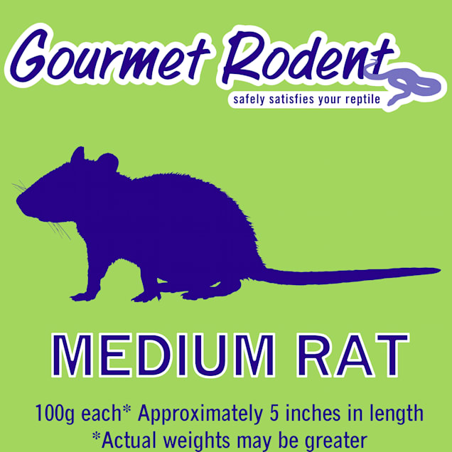 Frozen Medium Rat - 1 Count - Carousel image #1