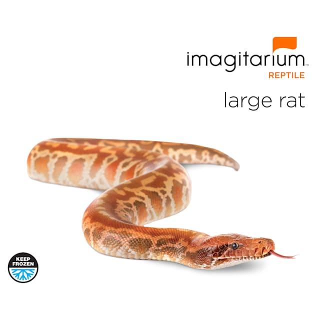 Frozen Large Rat - 1 Count - Carousel image #1