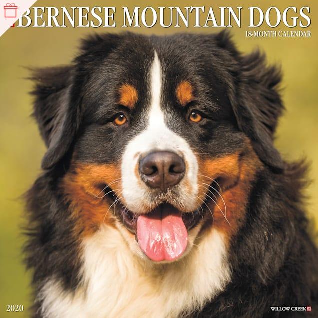 Willow Creek Press Bernese Mountain Dogs 2020 Wall Calendar - Carousel image #1