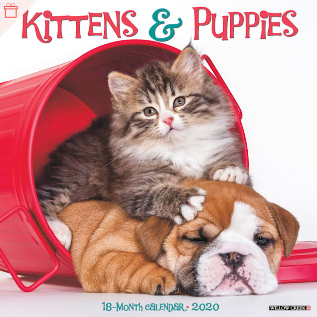 Willow Creek Press Kittens & Puppies 2020 Wall Calendar - Carousel image #1