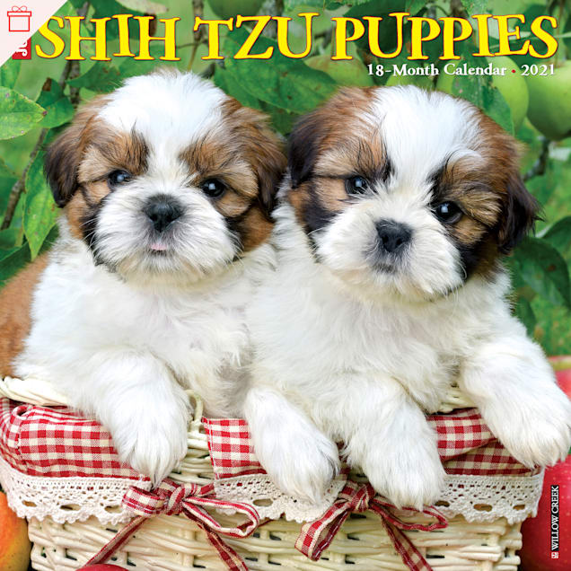 Willow Creek Press Shih Tzu Puppies 2021 Calendar, Large - Carousel image #1