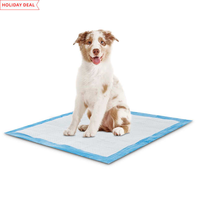 Animaze Absorbent Dog Potty Pads, Count of 50 - Carousel image #1