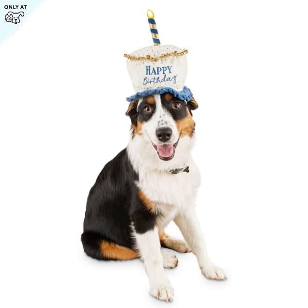 Bond & Co. Light Up Birthday Dog Hat, Small/Medium - Carousel image #1