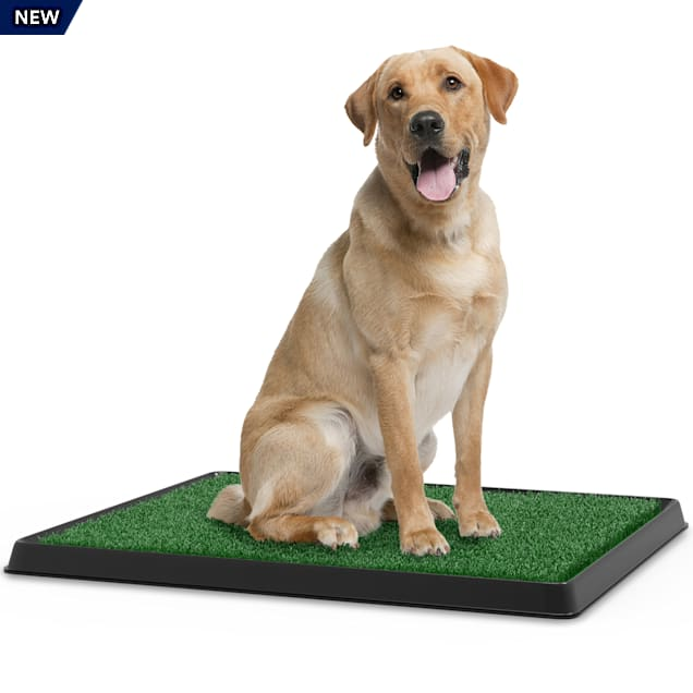 """Pet Pal Artificial Grass Potty Trainer Mat for Dogs, 20"""" L X 25"""" W - Carousel image #1"""