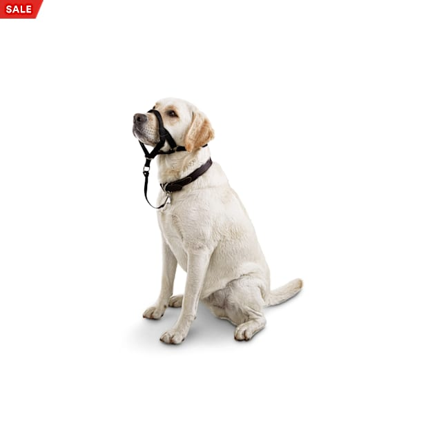 Good2Go Head Halter for Dogs, Large - Carousel image #1