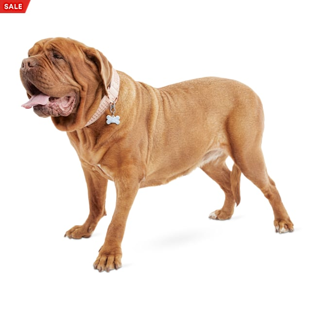 Bond & Co. Rose Gold Studded Collar for Big Dogs, X-Large/XX-Large - Carousel image #1