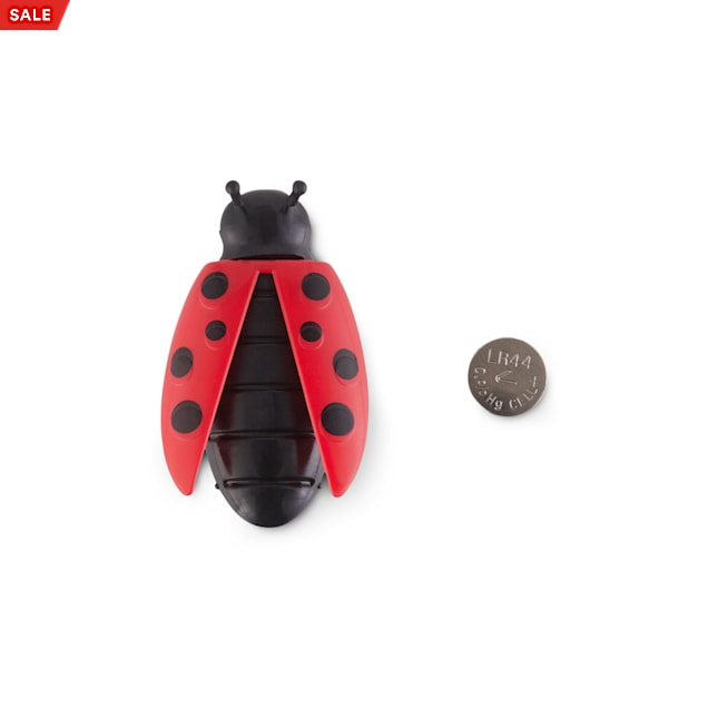 Leaps & Bounds Seek & Swat Electronic Lady Bug Cat Toy - Carousel image #1
