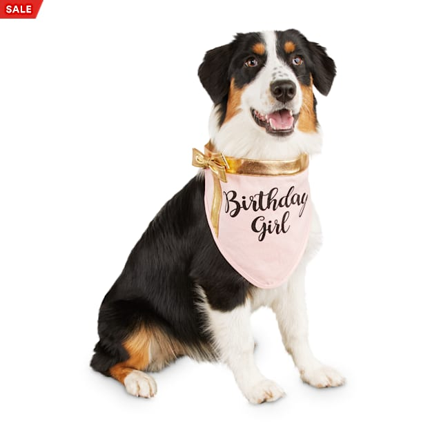 Bond & Co. Birthday Girl Dog Bandana, Small/Medium - Carousel image #1