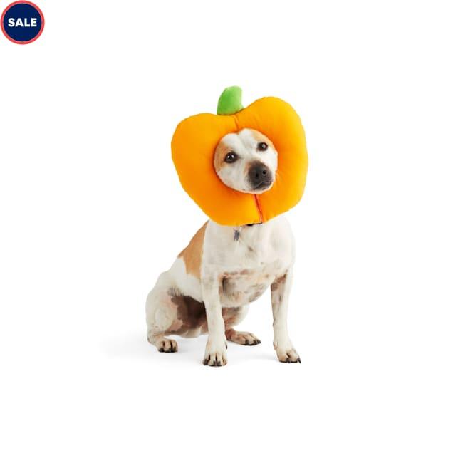 Bootique Pumpkin Bumkin Pet Headpiece, Small/Medium - Carousel image #1
