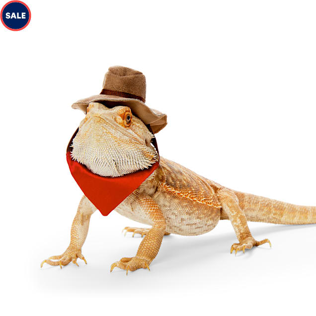 Bootique Lone Rider Cowboy Bearded Dragon Headpiece - Carousel image #1