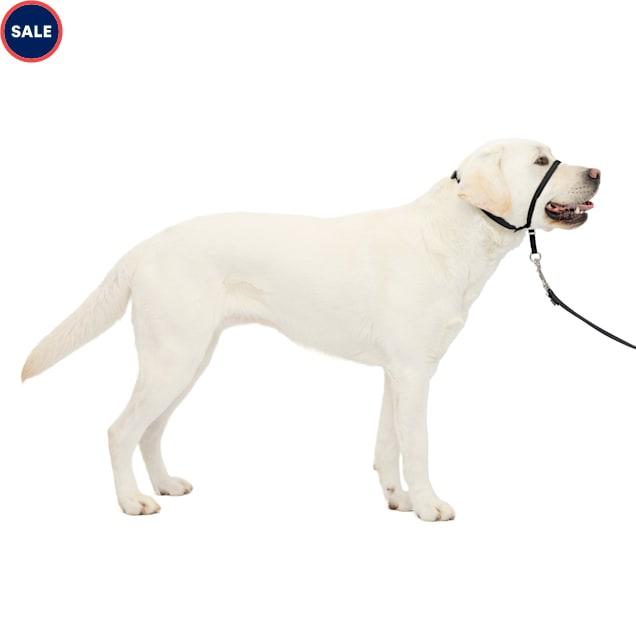 PetSafe Products Black Gentle Leader Headcollar - Carousel image #1