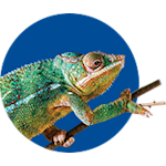 chameleon heating & lighting