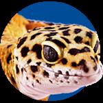 leopard gecko lighting