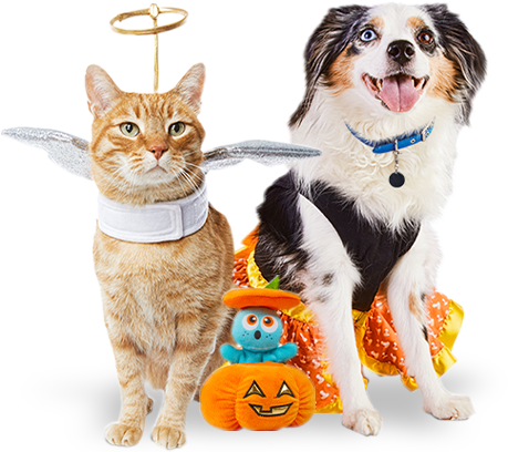 Petco Bakersfield Halloween 2020 Pet Supplies, Pet Food, and Pet Products | Petco