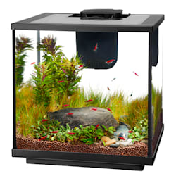 Fish Tank Fish Aquariums Kits Stands Petco