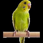 https://assets.petco.com/petco/image/upload/f_auto,q_auto,t_Cart-medium/112151-center-1