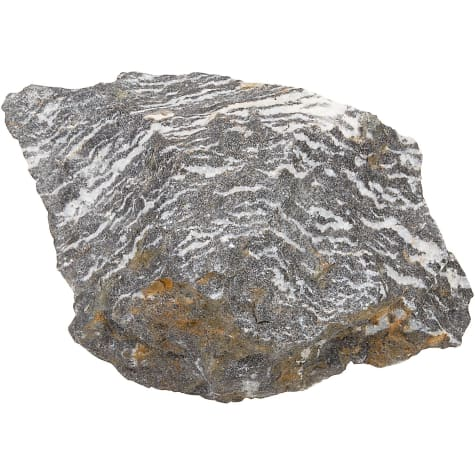 North American Pet Zebra Rock