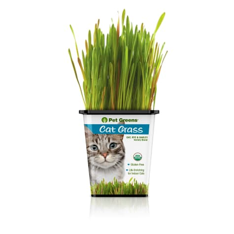 Pet Greens Bell Rock Growers Cat Grass Variety Oat, Rye and Barley Blend