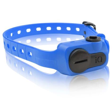 Dogtra iQ No Bark Dog Collar in Blue